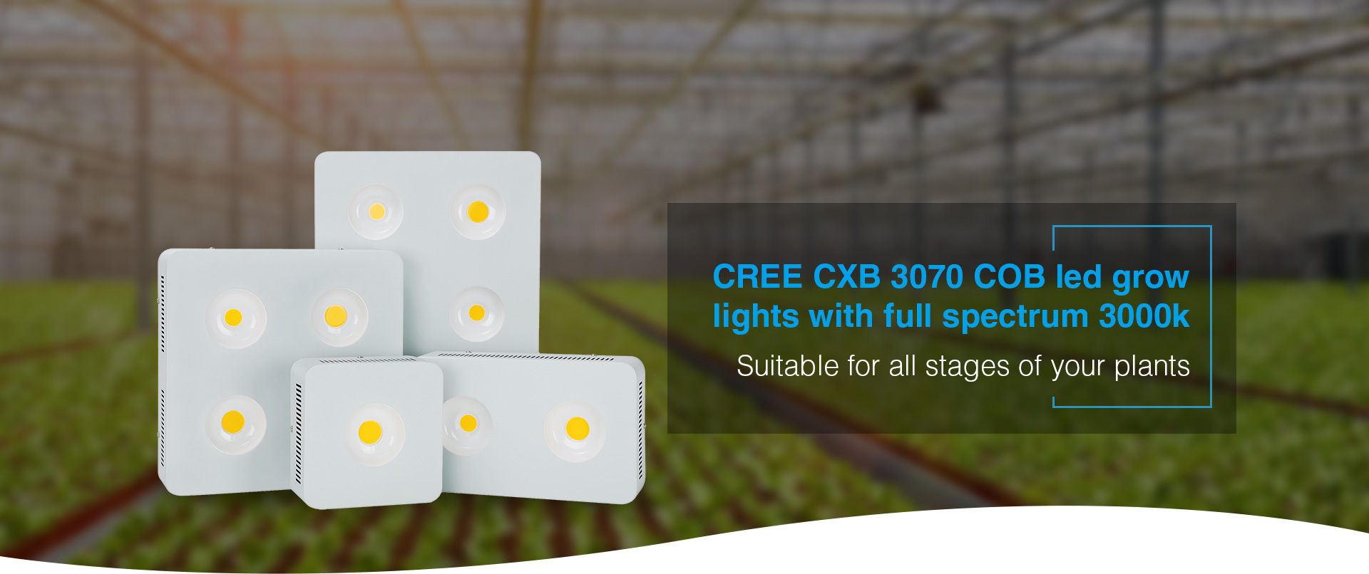 CREE CXB 3070 COB led grow light