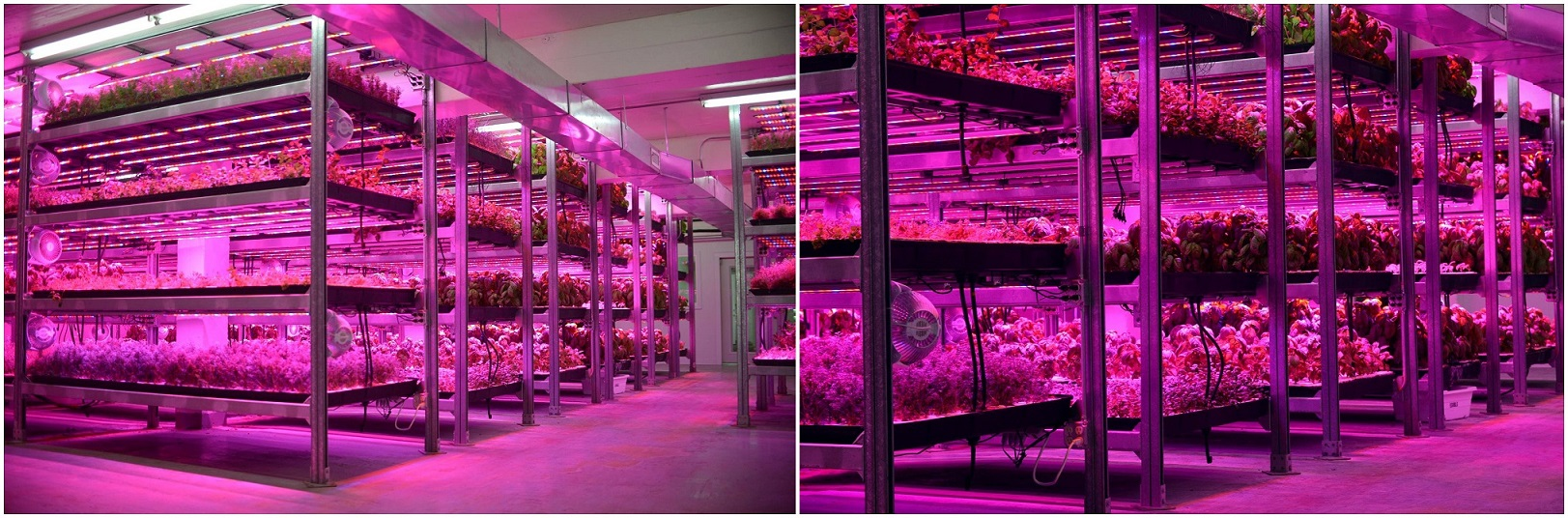 54w Led Bar grow light