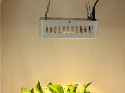 Plant Growth Lamps