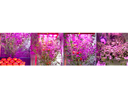 Using LED growing lights in your indoor