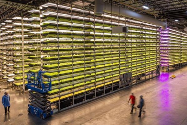 led bar grow lights for vertical farms