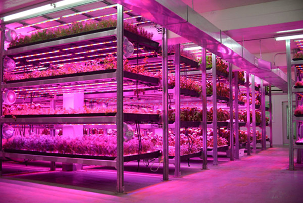 led bar grow lamp for vertical farms