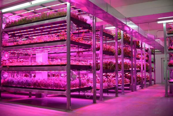 led bar grow lamp for vertical farms