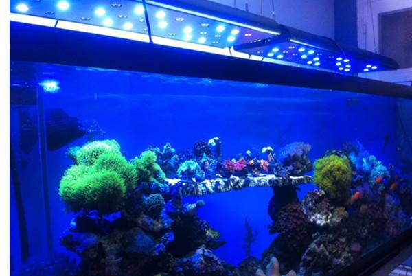 led aquarium lights for reef corals