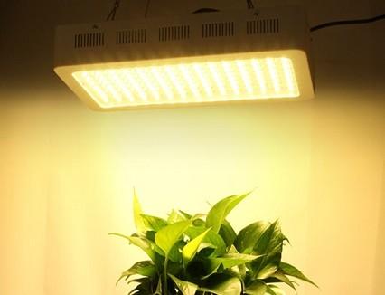5 Advantages of LED Plant Grow Lights